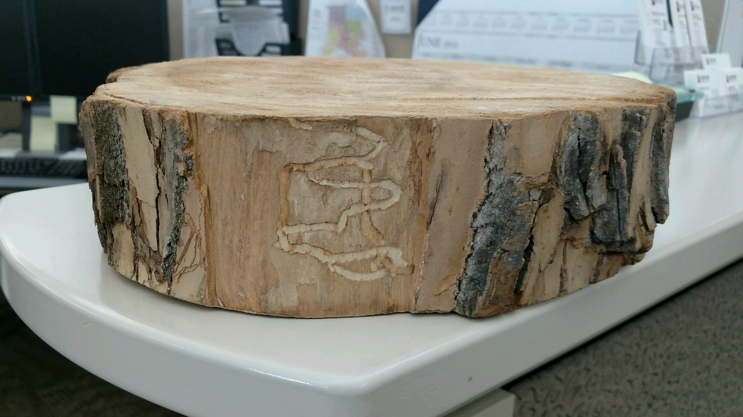 Denver's Office Of The City Forester Confiscated This Trivet That Was Being Used By A Colorado Caterer, After Became Clear It Was Carved From An Ash Tree That Had Been Infested With Emerald Ash Borer (EAB). It Was Later Determined The Trivet Was Made From Lumber In Lake Forest, Ill., In The Heart Of An EAB Infestation Zone.