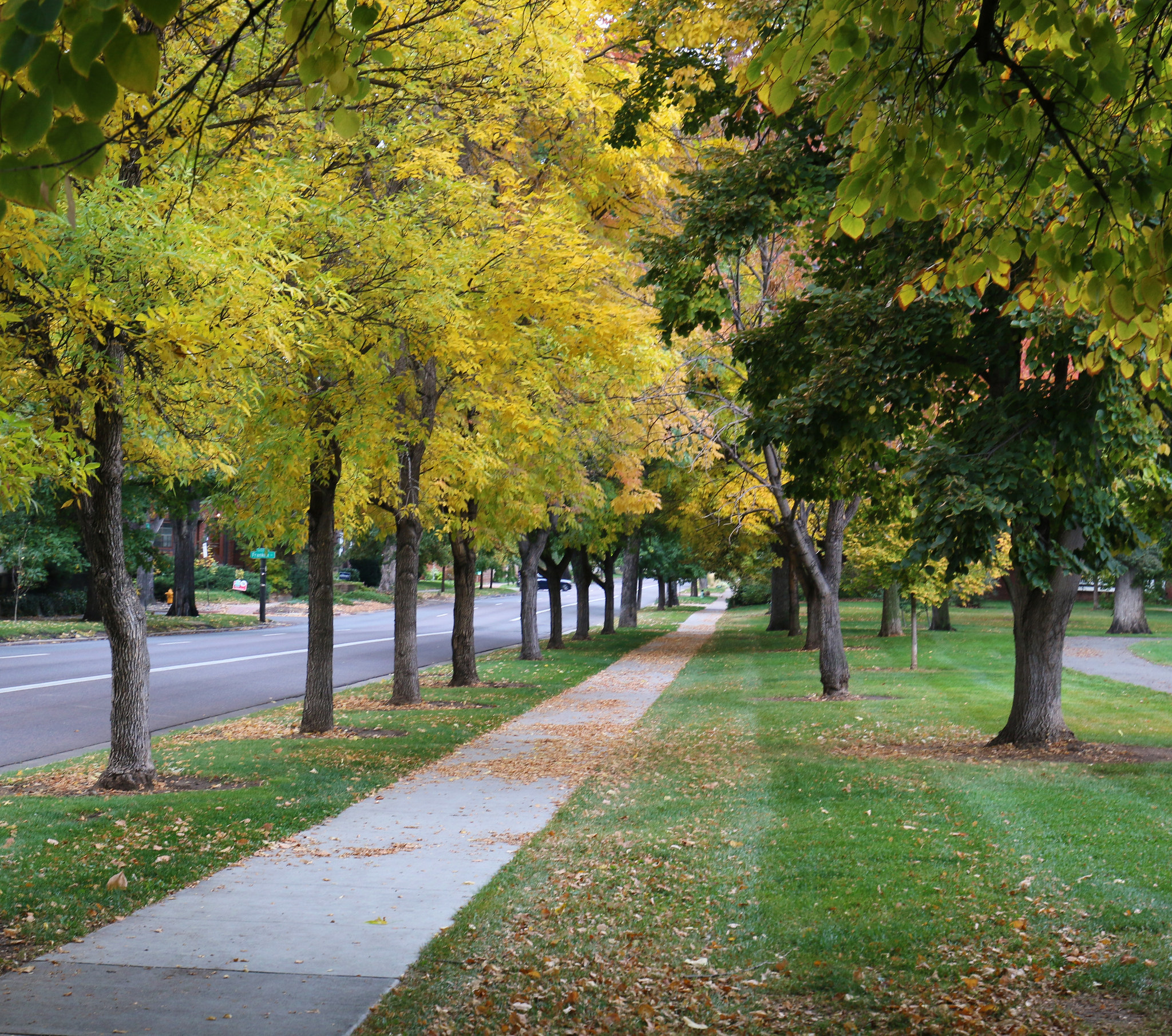 3 great spots to see the fall colors in Denver | Be A Smart Ash
