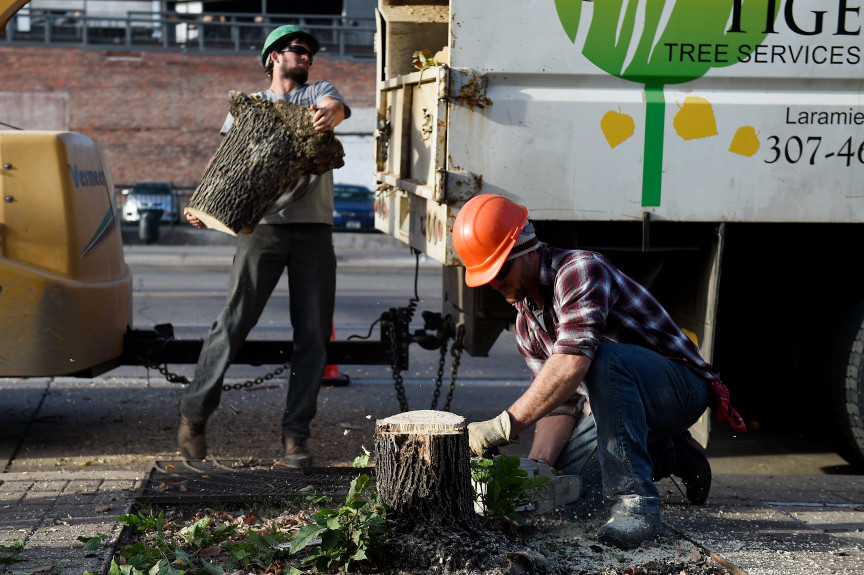 Downtown Denver Replaces Ash Trees Threatened By Emerald Ash Borer