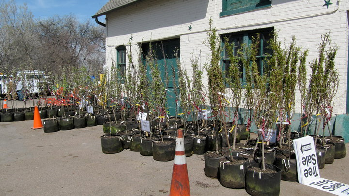 Denver's Office Of The City Forester Has Plenty Of Free Trees To Give Away In 2017.