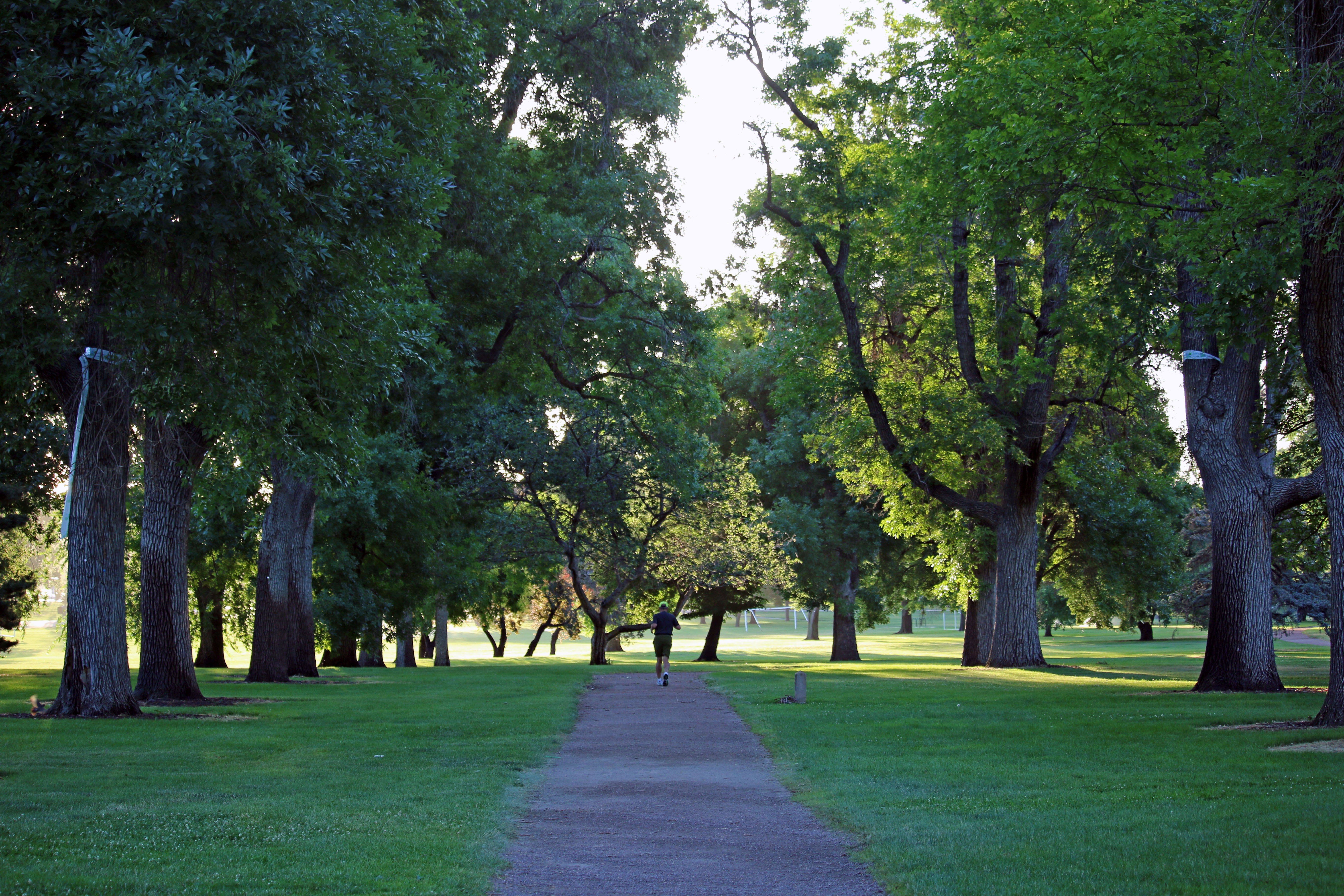 Help Denver Fight EAB By Mapping Your Favorite Trees With Curio
