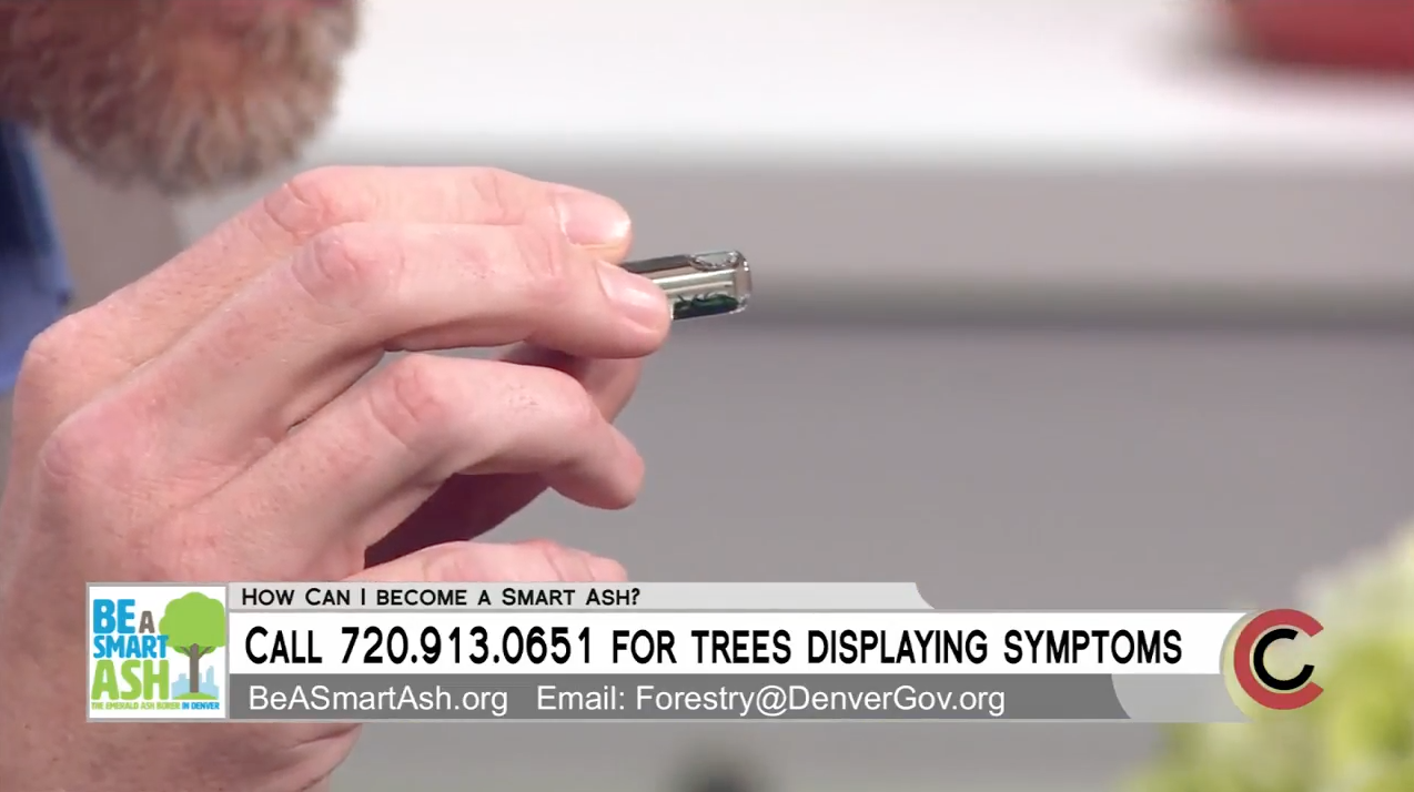 Video: Planting Unique Trees May Protect Denver From EAB