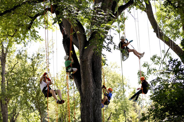 Participants Climb And Hang In Tree Climbing Harnesses During A Free Climb Day Hosted By Tree Climbing Colorado At Washington Park In Denver Saturday, July 22, 2017. Photo By Chancey Bush/ Photo Editor/ Evergreen Newspapers