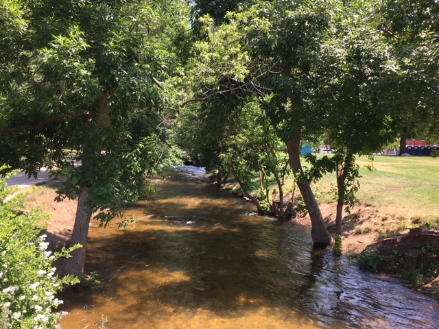 172 EAB-infested Ash Trees To Be Removed Along Boulder Creek