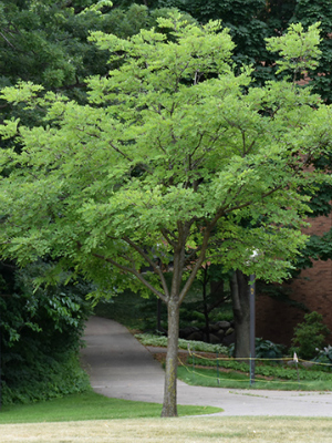 News About Emerald Ash Borers | Be a Smart Ash
